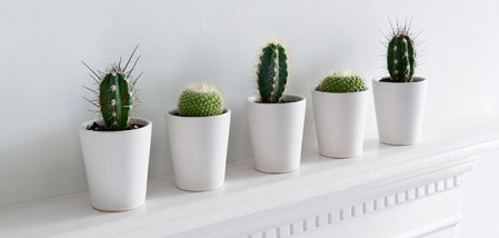 kaktus-po-fen-shuj-kaktus-po-fen-shuj-logo.jpg
